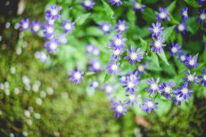 gardenwedding_02_archdays