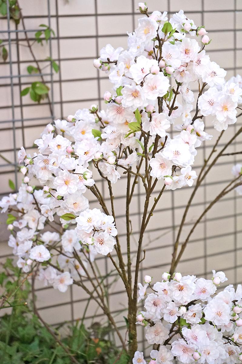 ベランダに桜